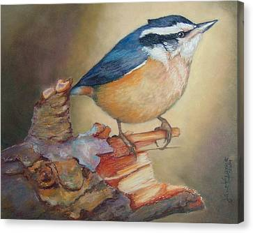 Red-breasted Nuthatch Bird Canvas Print by Janet Garcia