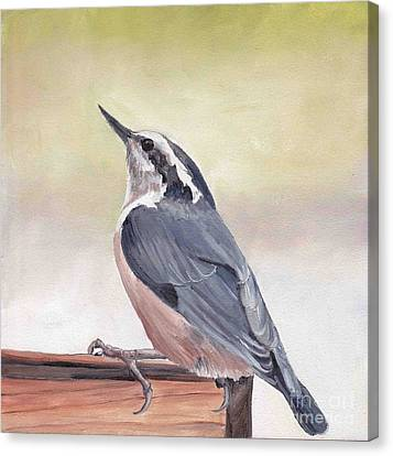 Red Breasted Nuthatch Canvas Print by Charlotte Yealey