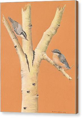 Red-breasted Nuthatches On Aspen Canvas Print by Gina Gahagan