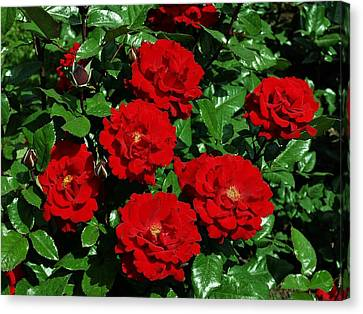 Red Brilliance Canvas Print