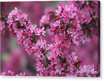 Red Bud Blossoms Canvas Print by Theresa Willingham