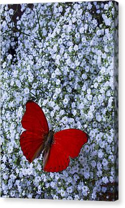 Breath Canvas Print - Red Butterfly And Baby's Breath by Garry Gay
