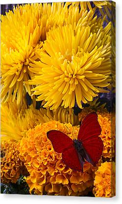 Red Butterfly On African Marigold Canvas Print by Garry Gay