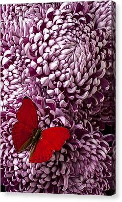 Red Butterfly On Red Mum Canvas Print by Garry Gay