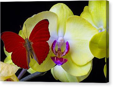 Red Butterfly On Yellow Orchid Canvas Print by Garry Gay