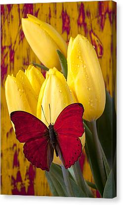 Red Butterfly Resting On Tulips Canvas Print by Garry Gay