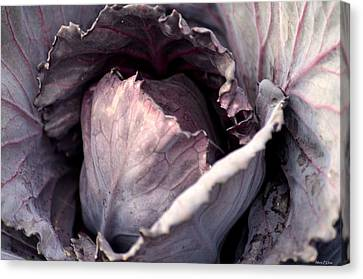Red Cabbage Canvas Print by Maria Urso
