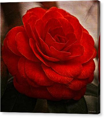 Flower Canvas Print - Red Camelia by Keith Gondron