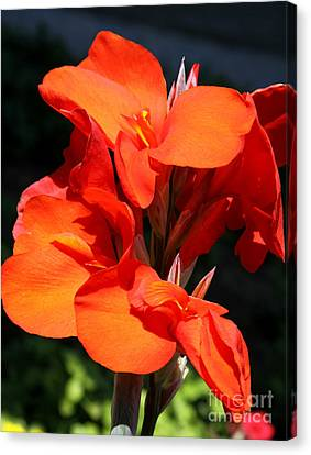 Red Canna  Canvas Print by Christiane Schulze Art And Photography