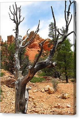 Red Canyon Tree And Rocks Canvas Print by Debra Thompson