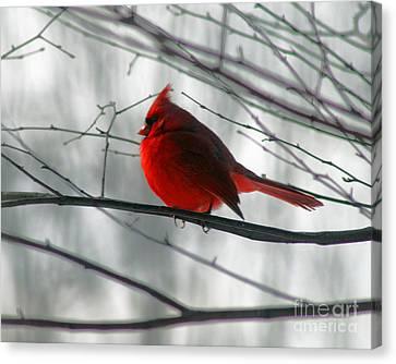 Red Cardinal On Winter Branch  Canvas Print by Karen Adams