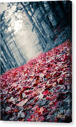 Red Carpet Canvas Print by Edward Fielding