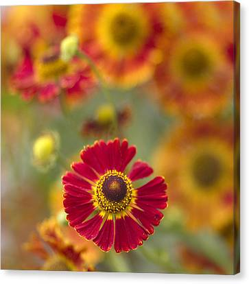 Red Centered Canvas Print by Rebecca Cozart