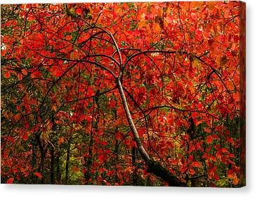 Red Canvas Print by Chad Dutson