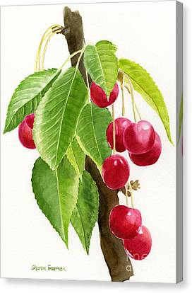 Red Cherries On A Branch Canvas Print by Sharon Freeman