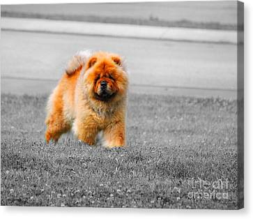 Red Chow Canvas Print by Jai Johnson