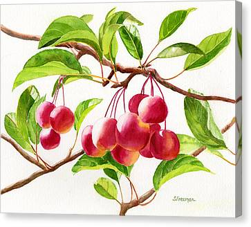 Red Crab Apples Canvas Print by Sharon Freeman