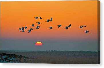 Crane Canvas Print - Red-crowned Crane by Hua Zhu