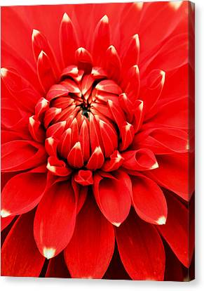 Canvas Print featuring the photograph Red Dahlia With White Tips by E Faithe Lester