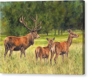 Red Deer Family Canvas Print by David Stribbling