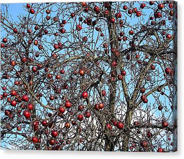 Red Delights At Season End Canvas Print