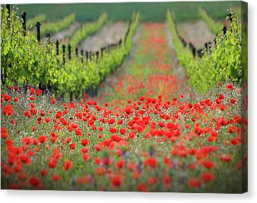 Plantation Canvas Print - Red District by Ales Komovec