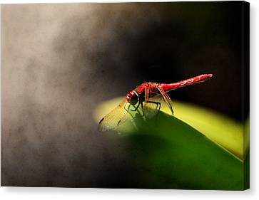 Red Dragonfly And Smoke Canvas Print by Sally Bauer