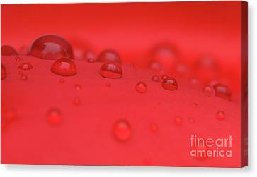 Red Drops Canvas Print by Karol Livote