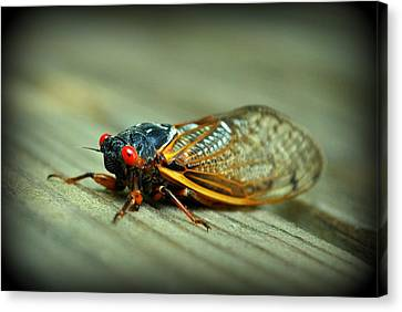 Canvas Print featuring the photograph Red Eye Cicada by Kelly Nowak
