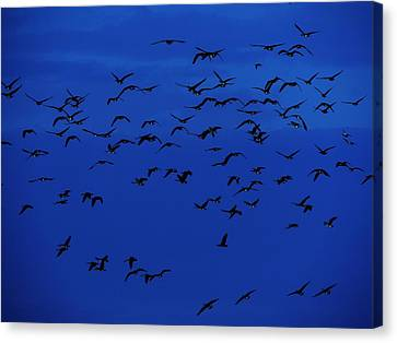 Red Eye Flight Canvas Print by Todd Sherlock
