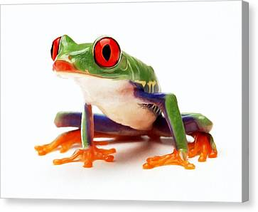 Red-eye Tree Frog 1 Canvas Print by Lanjee Chee