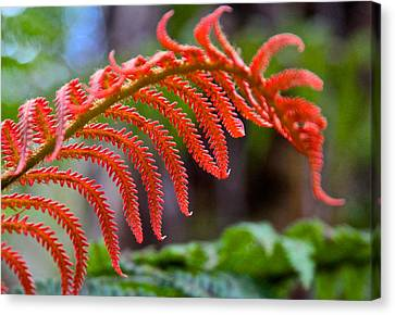 Autumn Fern In Hawaii Canvas Print by Venetia Featherstone-Witty