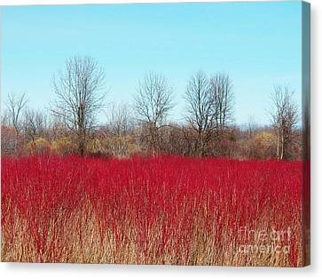 Red Fields Canvas Print by Judy Via-Wolff