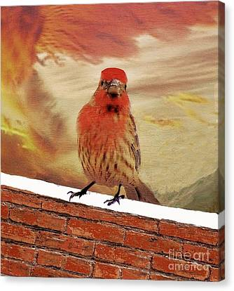 Red Finch On Red Brick Canvas Print by Janette Boyd