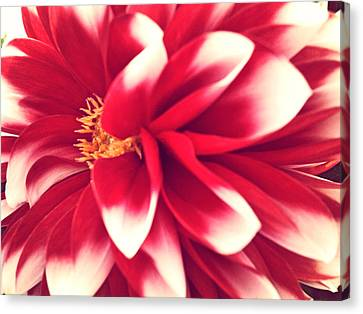 Red Flower Canvas Print by Beril Sirmacek