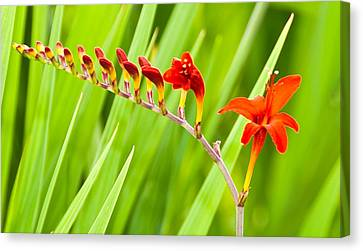 Red Flower Family Canvas Print by Dee Dee  Whittle