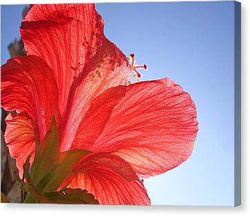 Red Flower In The Sun By Jan Marvin Studios Canvas Print
