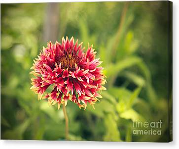 Canvas Print featuring the photograph Red Flower by Mohamed Elkhamisy