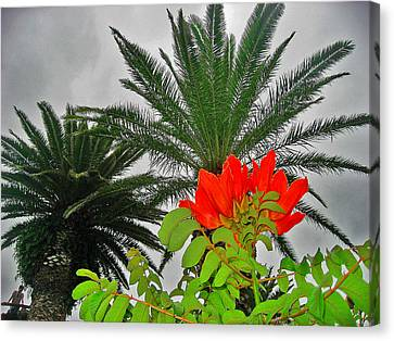 Red Flower. Palma. Canary Islands. Canvas Print by Andy Za