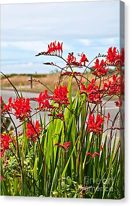 Red Flowers Crocosmia Lucifer Montbretia Plant Art Prints Canvas Print