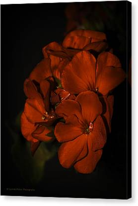 Canvas Print featuring the photograph Red Flowers In Evening Light by Lucinda Walter