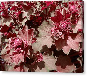 Canvas Print featuring the photograph Red Flowers by Laurie Tsemak
