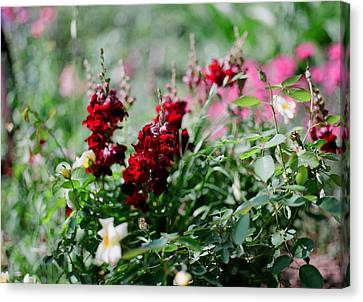 Red Flowers On Film Canvas Print
