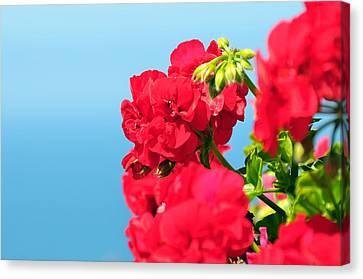 Red Flowers Canvas Print by Paul Van Baardwijk