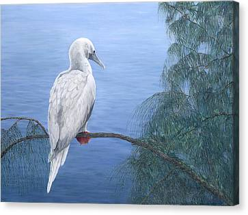 Red-footed Booby Canvas Print by Dorothea Hyde