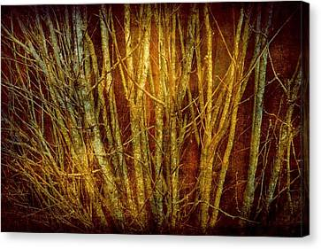 Red Forest Canvas Print by Patricia Strand