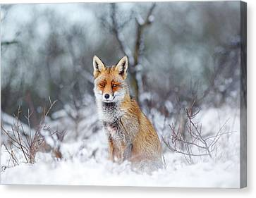 Red Fox Blue World Canvas Print by Roeselien Raimond