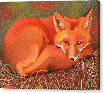 Red Fox Canvas Print by Dan Miller