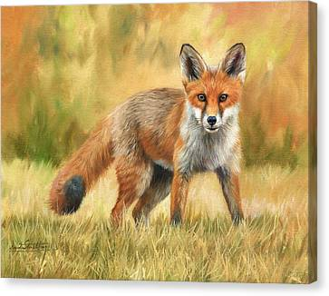 Red Fox Canvas Print by David Stribbling