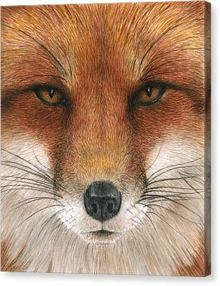 Red Fox Gaze Canvas Print by Pat Erickson